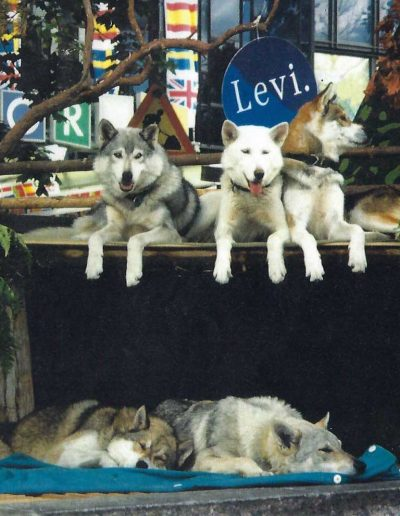 LeviHuskyParkmemories (5 of 12)